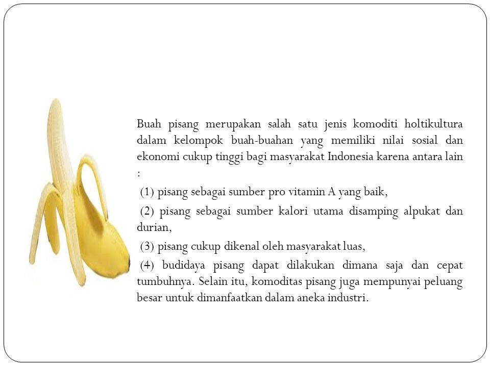 Buah pisang merupakan salah satu jenis komoditi holtikultura dalam kelompok buah-buahan yang memiliki nilai sosial dan ekonomi cukup tinggi bagi masyarakat Indonesia karena antara lain :