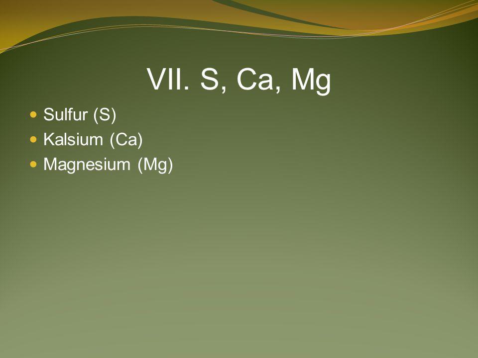 VII. S, Ca, Mg Sulfur (S) Kalsium (Ca) Magnesium (Mg)