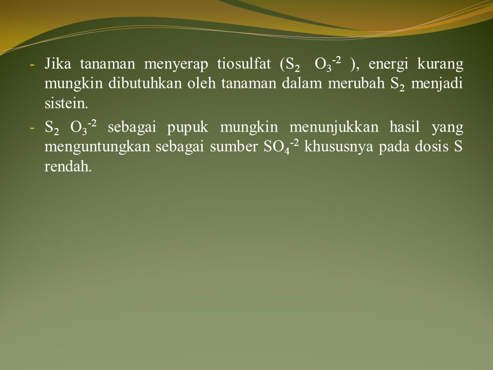 Jika tanaman menyerap tiosulfat (S2 O3-2 ), energi kurang mungkin dibutuhkan oleh tanaman dalam merubah S2 menjadi sistein.