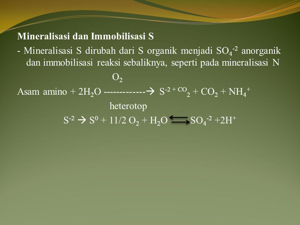 Mineralisasi dan Immobilisasi S - Mineralisasi S dirubah dari S organik menjadi SO4-2 anorganik dan immobilisasi reaksi sebaliknya, seperti pada mineralisasi N O2 Asam amino + 2H2O ------------- S-2 + CO2 + CO2 + NH4+ heterotop S-2  S0 + 11/2 O2 + H2O SO4-2 +2H+