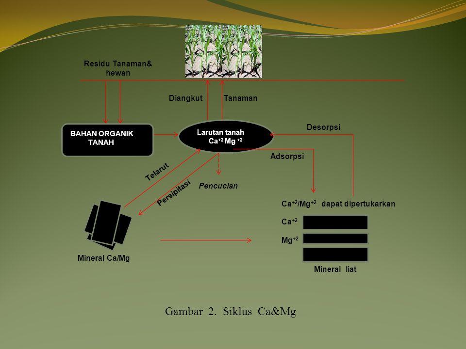 Gambar 2. Siklus Ca&Mg Residu Tanaman& hewan Diangkut Tanaman Desorpsi