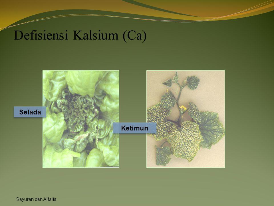Defisiensi Kalsium (Ca)