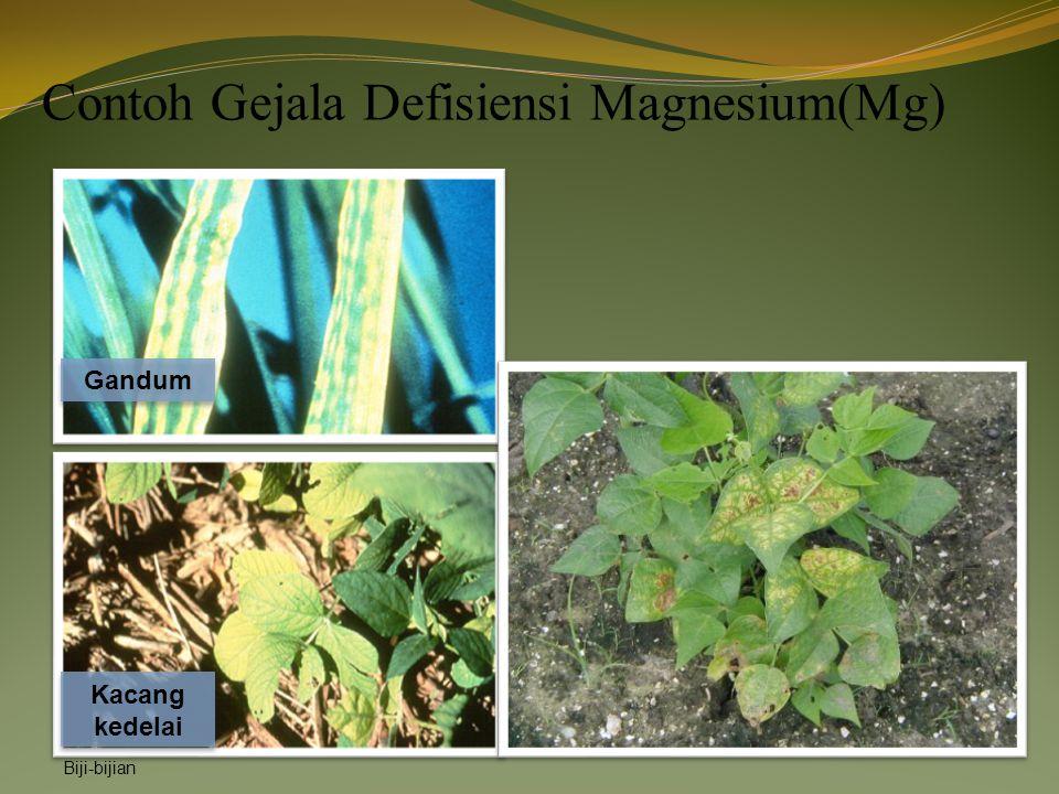 Contoh Gejala Defisiensi Magnesium(Mg)