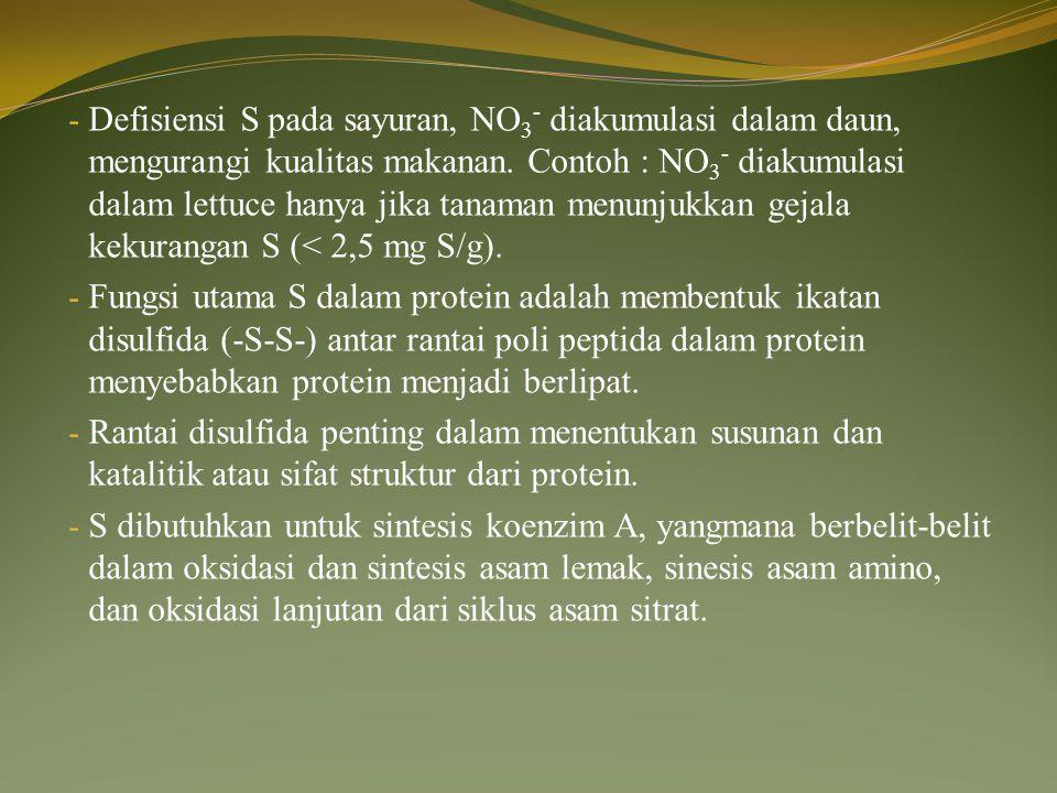 Defisiensi S pada sayuran, NO3- diakumulasi dalam daun, mengurangi kualitas makanan. Contoh : NO3- diakumulasi dalam lettuce hanya jika tanaman menunjukkan gejala kekurangan S (< 2,5 mg S/g).