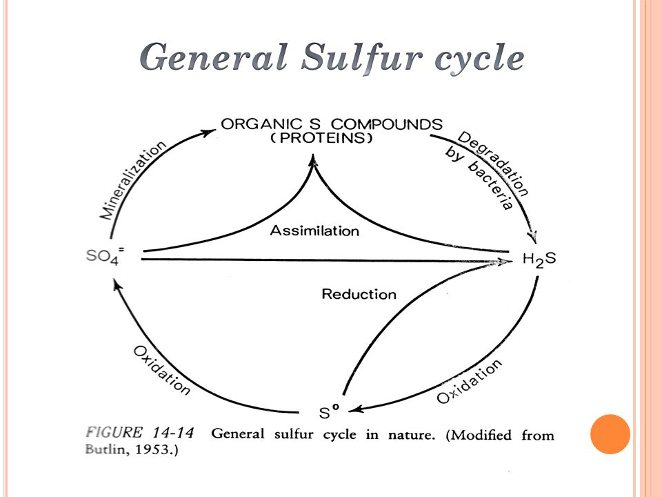 General Sulfur cycle
