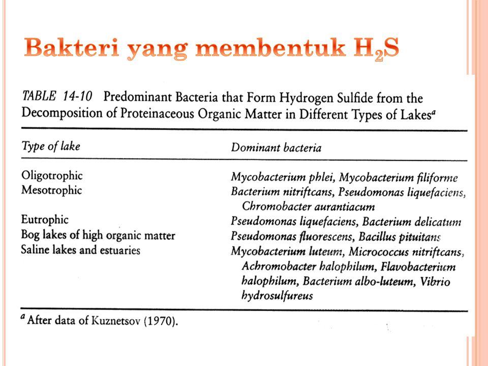 Bakteri yang membentuk H2S