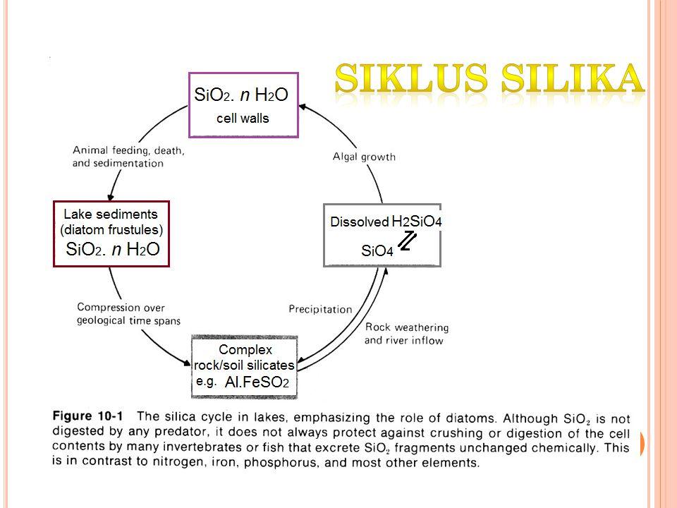 Siklus silika