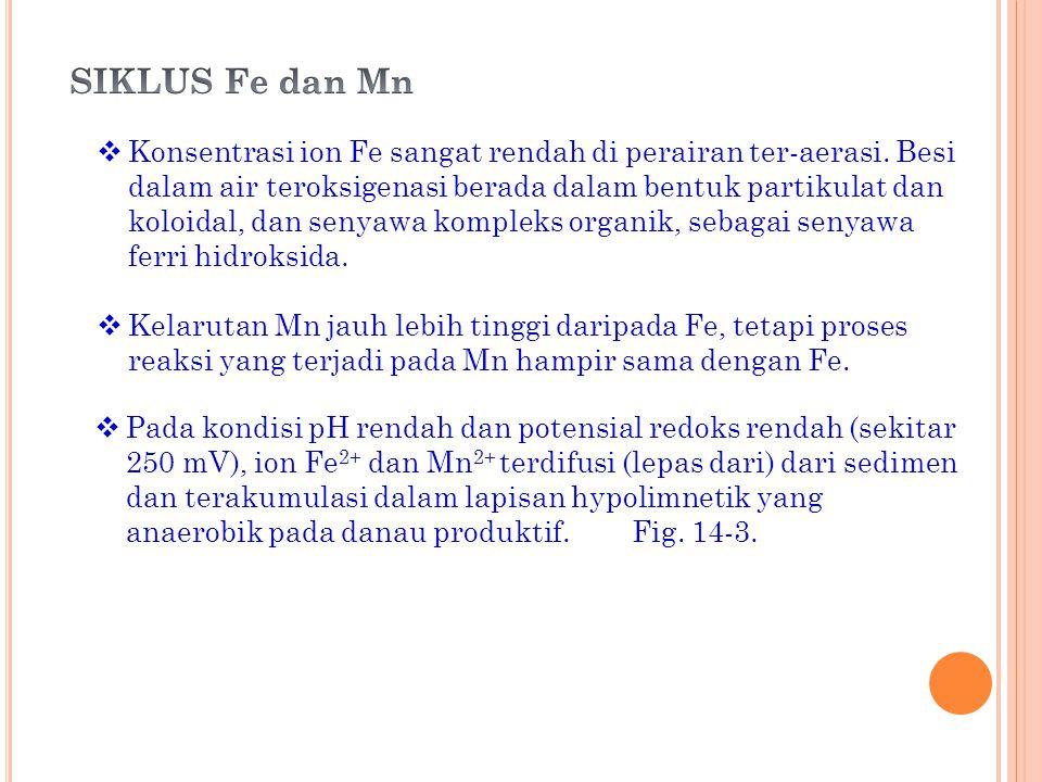SIKLUS Fe dan Mn