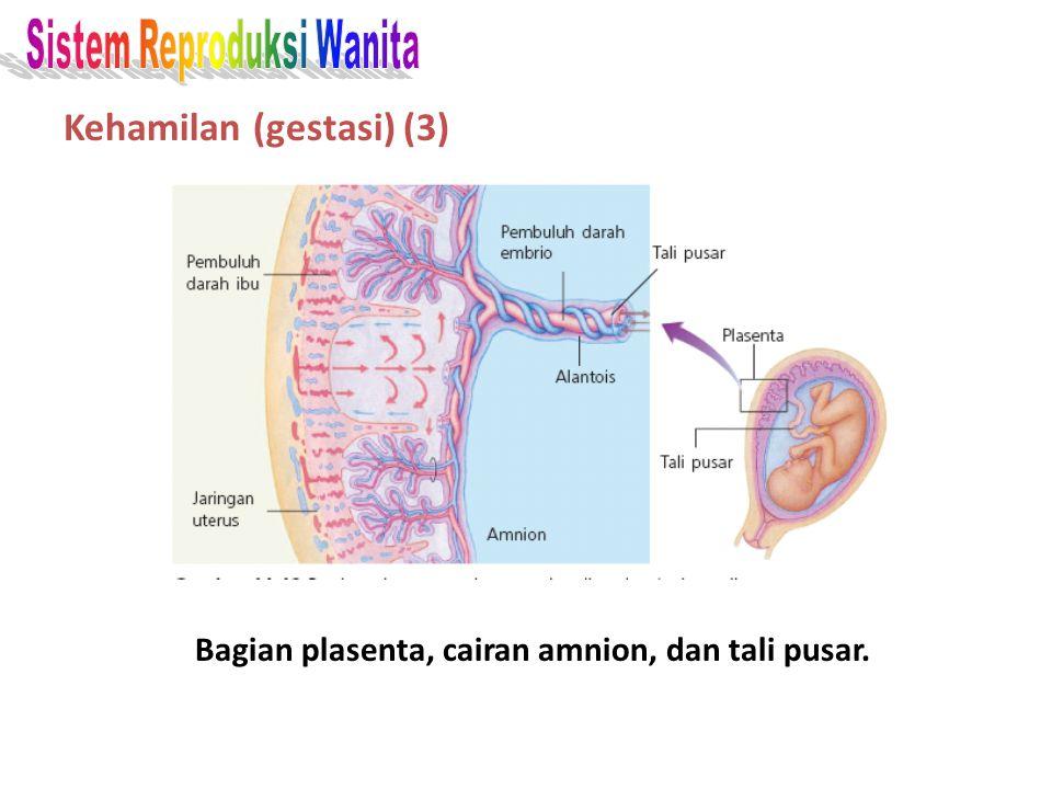 Kehamilan (gestasi) (3)