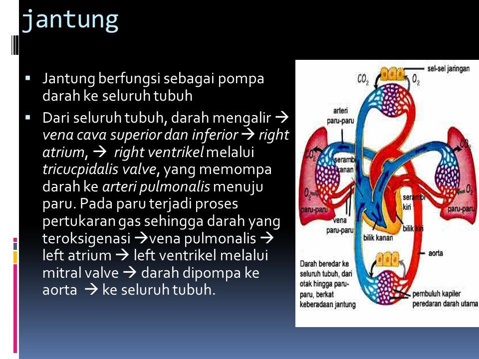 jantung Jantung berfungsi sebagai pompa darah ke seluruh tubuh