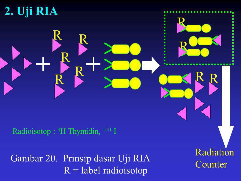 R R R R R R R R R 2. Uji RIA Radiation Counter