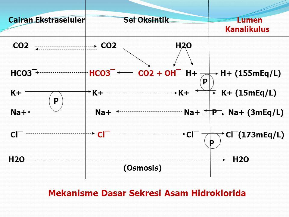 Mekanisme Dasar Sekresi Asam Hidroklorida