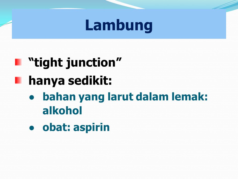 Lambung tight junction hanya sedikit: