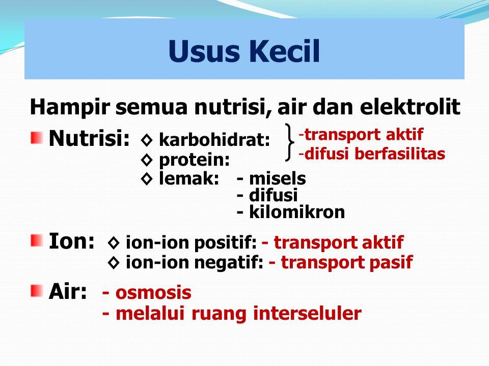 Usus Kecil Hampir semua nutrisi, air dan elektrolit