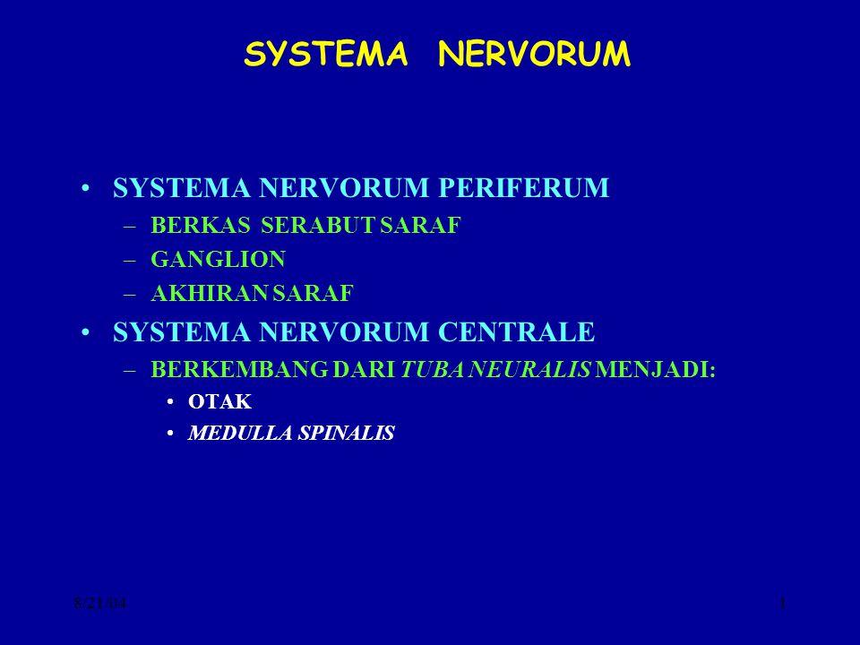SYSTEMA NERVORUM SYSTEMA NERVORUM PERIFERUM SYSTEMA NERVORUM CENTRALE