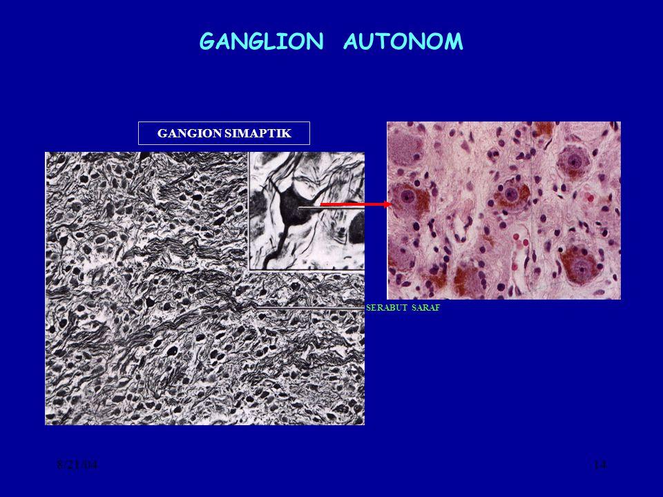 GANGLION AUTONOM GANGION SIMAPTIK SERABUT SARAF 8/21/04