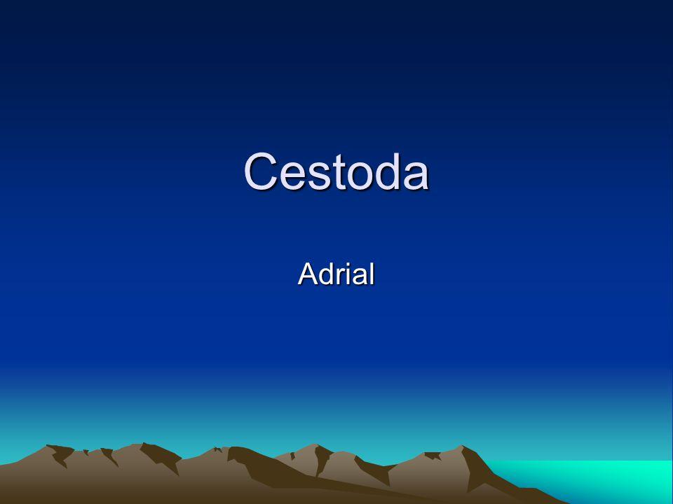 Cestoda Adrial