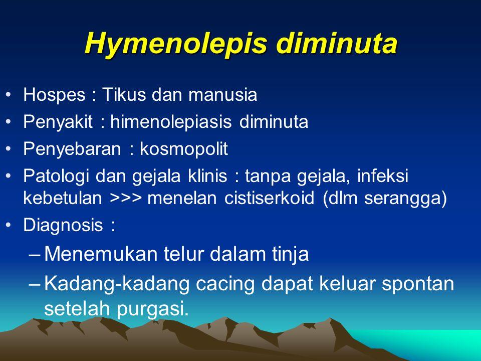 Hymenolepis diminuta Menemukan telur dalam tinja