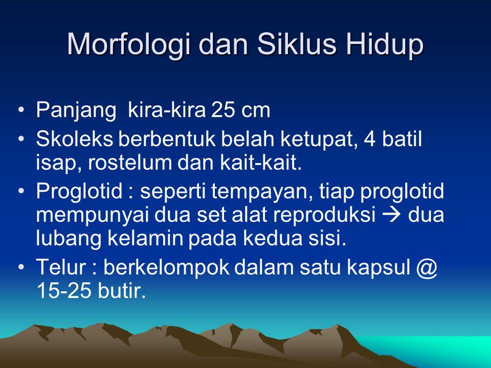 Morfologi dan Siklus Hidup