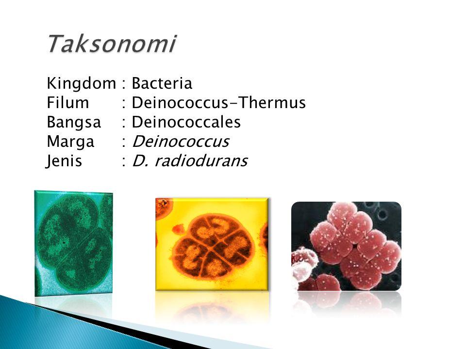 Taksonomi Kingdom : Bacteria Filum : Deinococcus-Thermus Bangsa : Deinococcales Marga : Deinococcus Jenis : D.