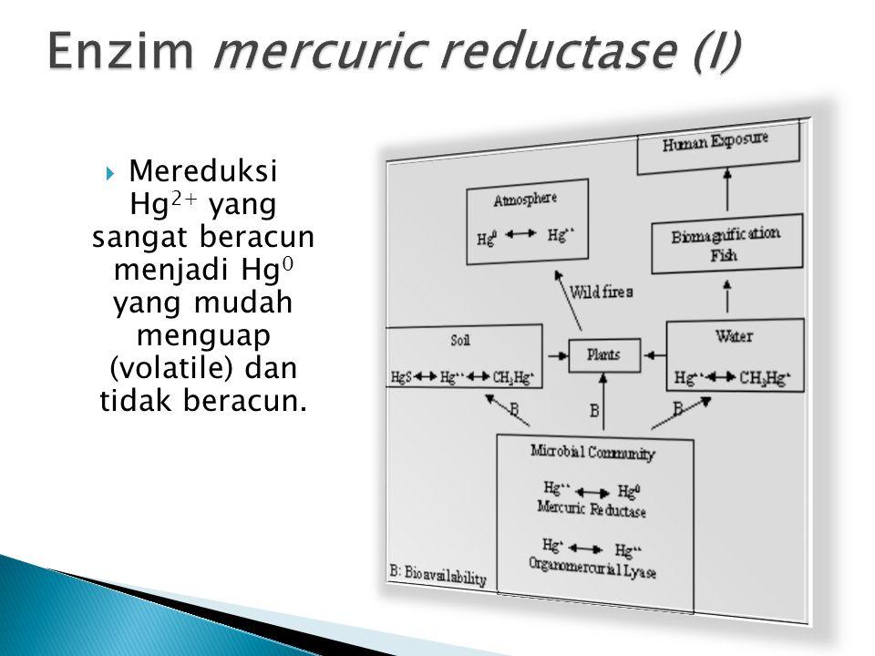Enzim mercuric reductase (I)
