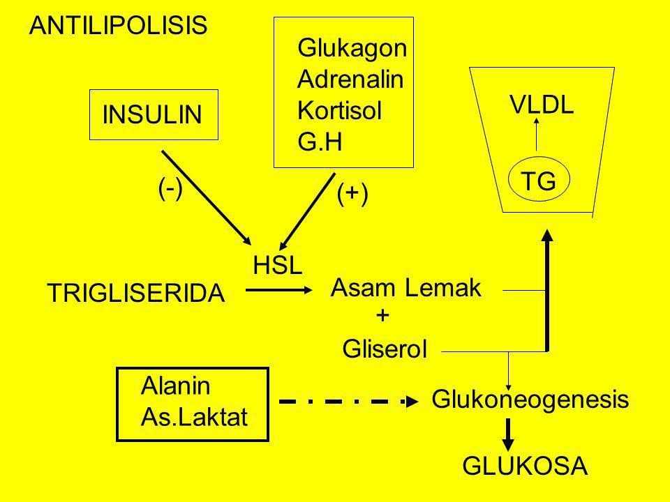 ANTILIPOLISIS Glukagon Adrenalin Kortisol G.H. VLDL. INSULIN. TG. (-) (+) HSL. Asam Lemak.