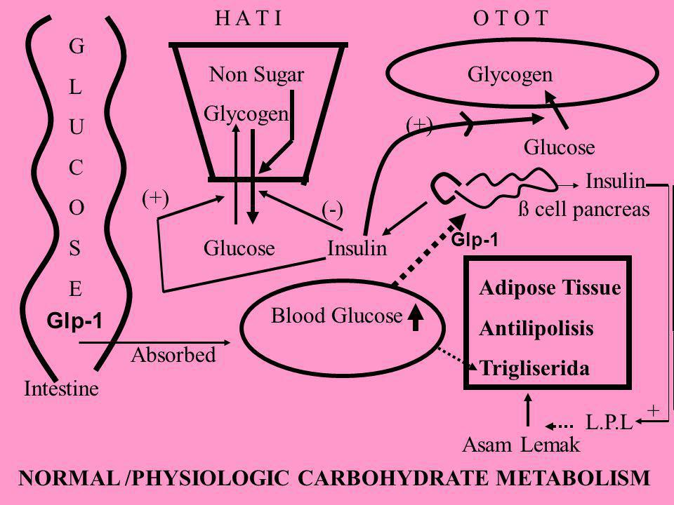 NORMAL /PHYSIOLOGIC CARBOHYDRATE METABOLISM