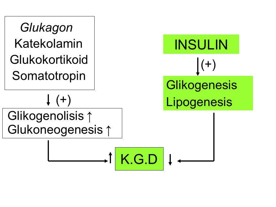 INSULIN K.G.D K.G.D Glukagon Katekolamin Glukokortikoid (+)