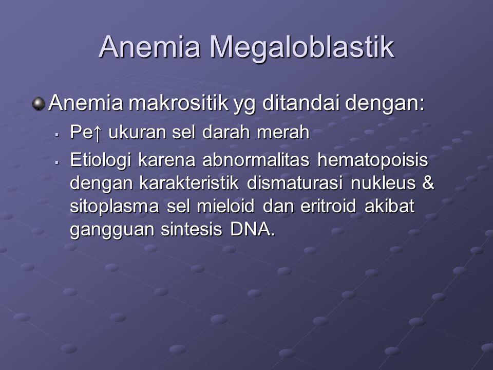 Anemia Megaloblastik Anemia makrositik yg ditandai dengan: