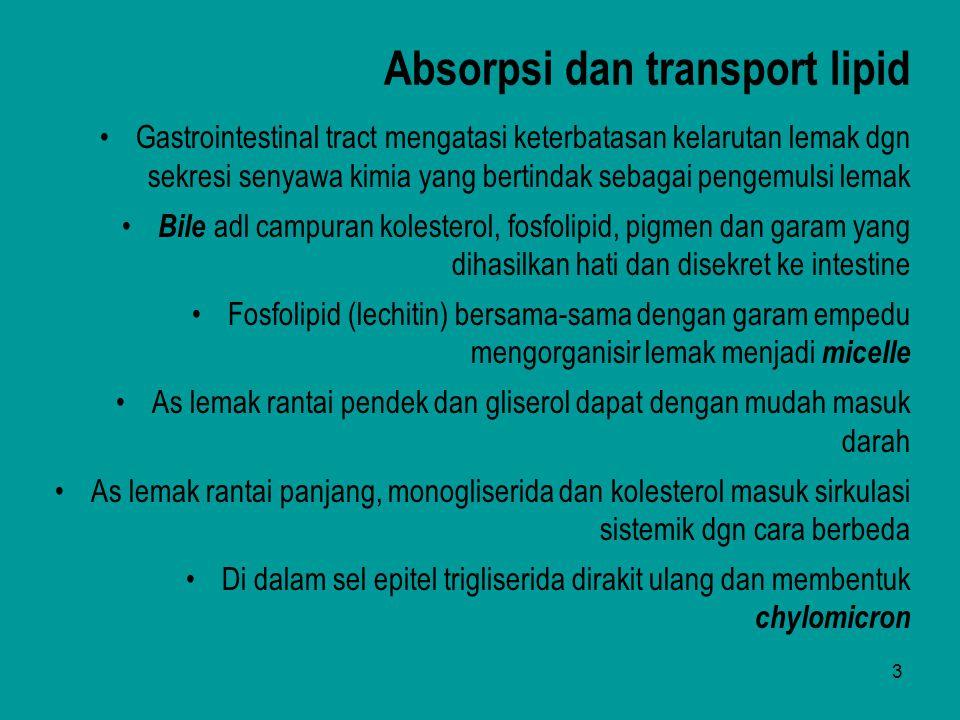 Absorpsi dan transport lipid