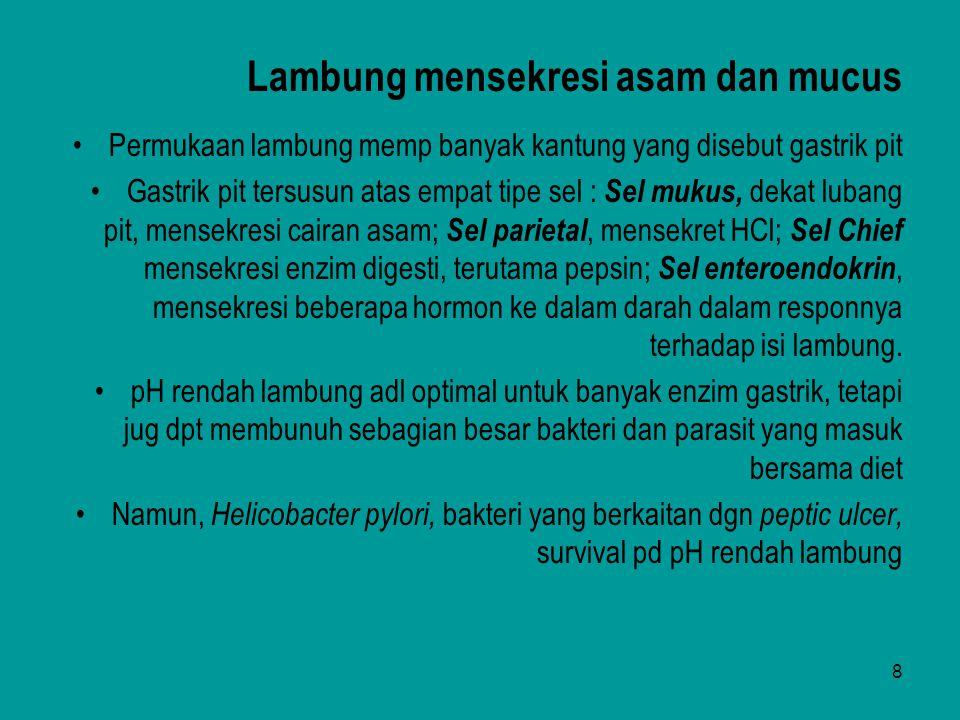 Lambung mensekresi asam dan mucus