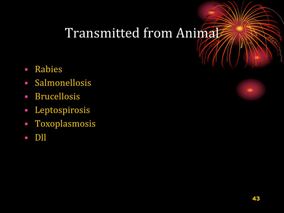 Transmitted from Animal