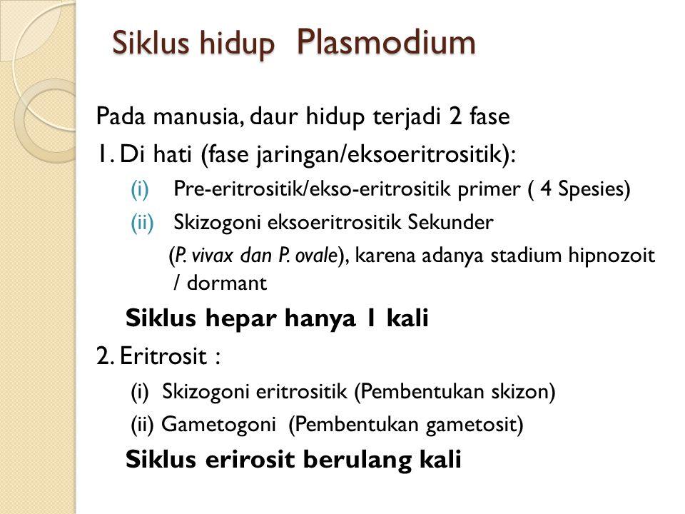 Siklus hidup Plasmodium