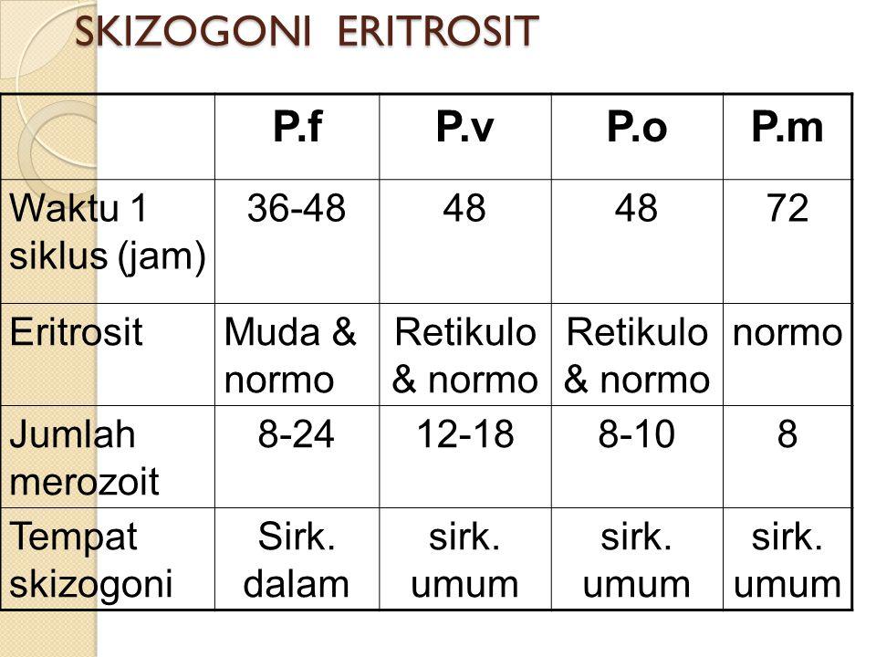 SKIZOGONI ERITROSIT P.f P.v P.o P.m Waktu 1 siklus (jam) 36-48 48 72