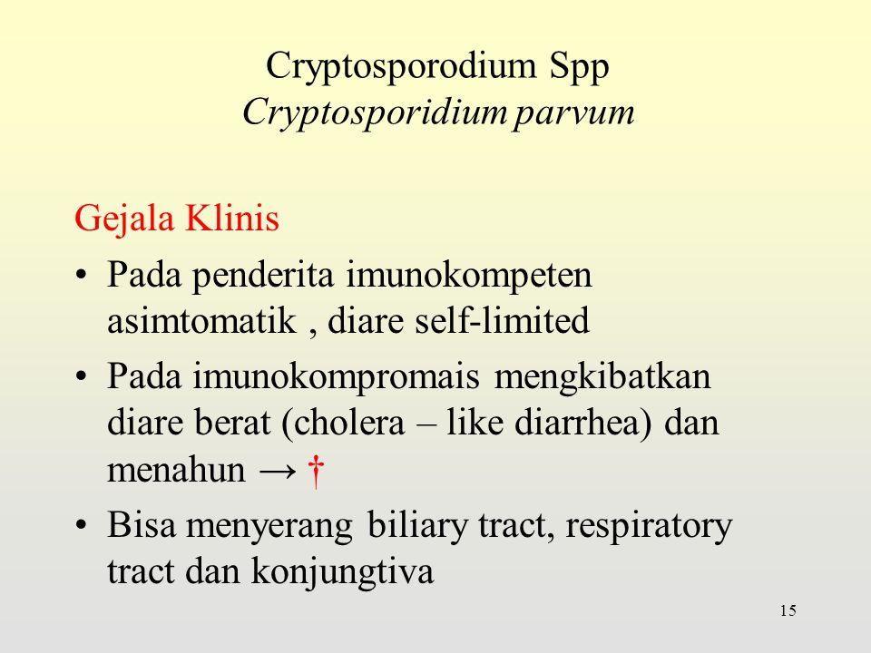 Cryptosporodium Spp Cryptosporidium parvum