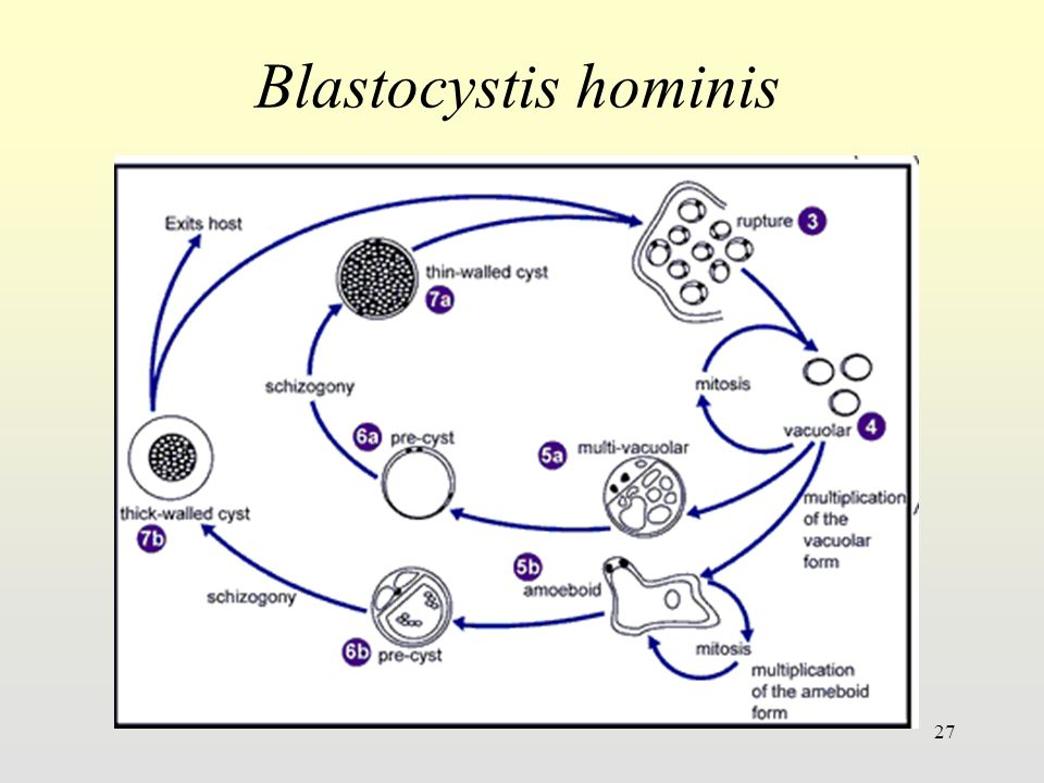 Blastocystis hominis