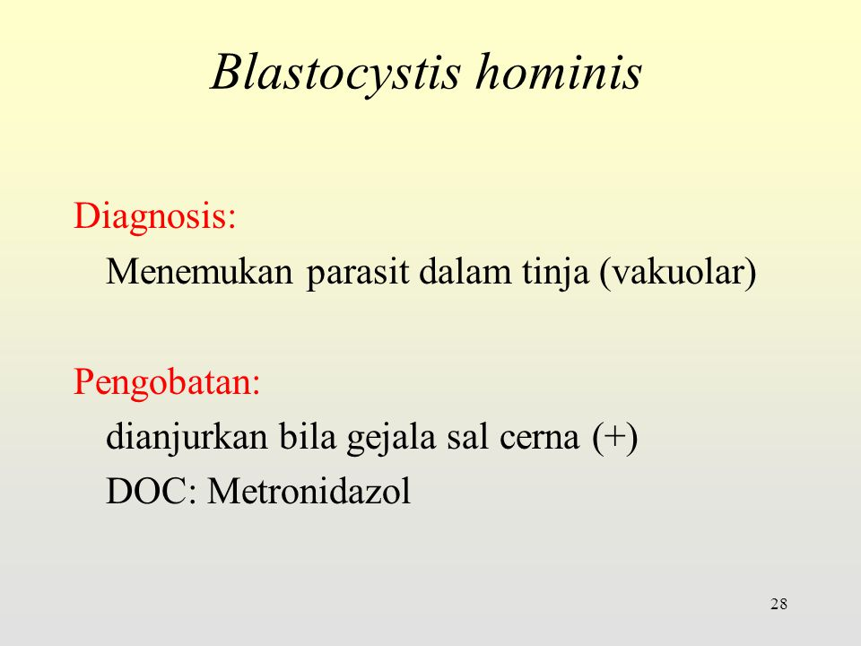 Blastocystis hominis Diagnosis: Menemukan parasit dalam tinja (vakuolar) Pengobatan: dianjurkan bila gejala sal cerna (+) DOC: Metronidazol