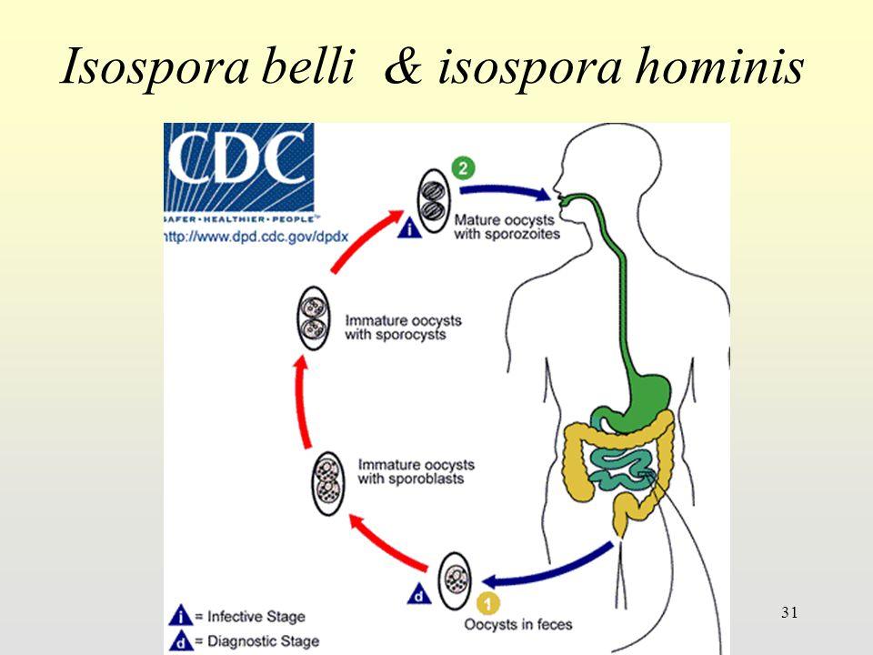 Isospora belli & isospora hominis