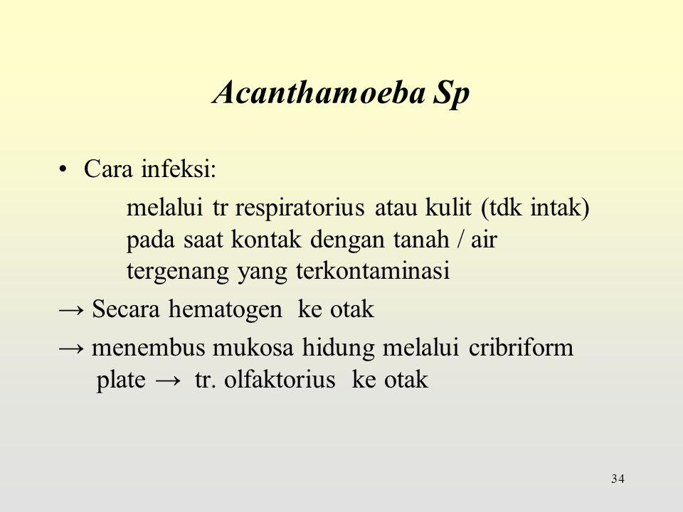 Acanthamoeba Sp Cara infeksi:
