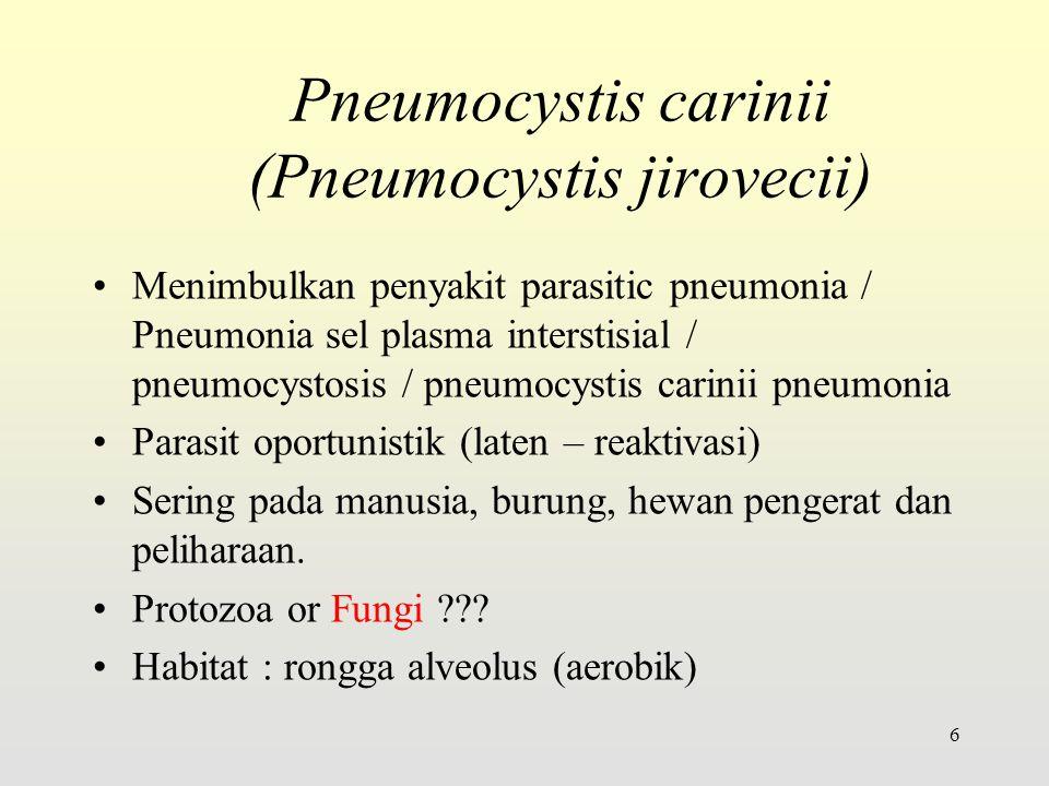 Pneumocystis carinii (Pneumocystis jirovecii)
