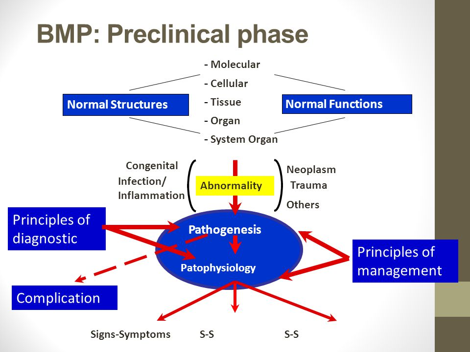 BMP: Preclinical phase