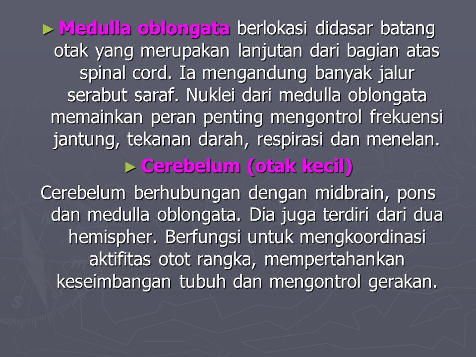 Cerebelum (otak kecil)