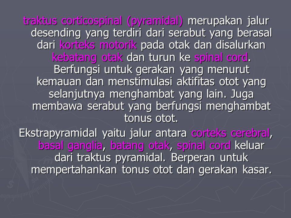 traktus corticospinal (pyramidal) merupakan jalur desending yang terdiri dari serabut yang berasal dari korteks motorik pada otak dan disalurkan kebatang otak dan turun ke spinal cord. Berfungsi untuk gerakan yang menurut kemauan dan menstimulasi aktifitas otot yang selanjutnya menghambat yang lain. Juga membawa serabut yang berfungsi menghambat tonus otot.