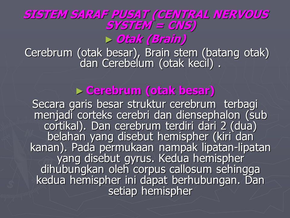 SISTEM SARAF PUSAT (CENTRAL NERVOUS SYSTEM = CNS)