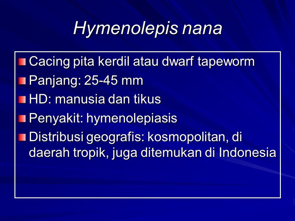 Hymenolepis nana Cacing pita kerdil atau dwarf tapeworm