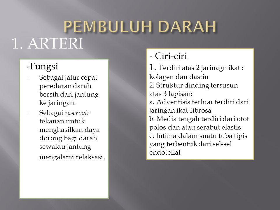 PEMBULUH DARAH 1. ARTERI - Ciri-ciri
