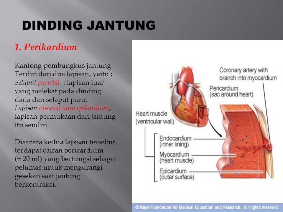 DINDING JANTUNG 1. Perikardium