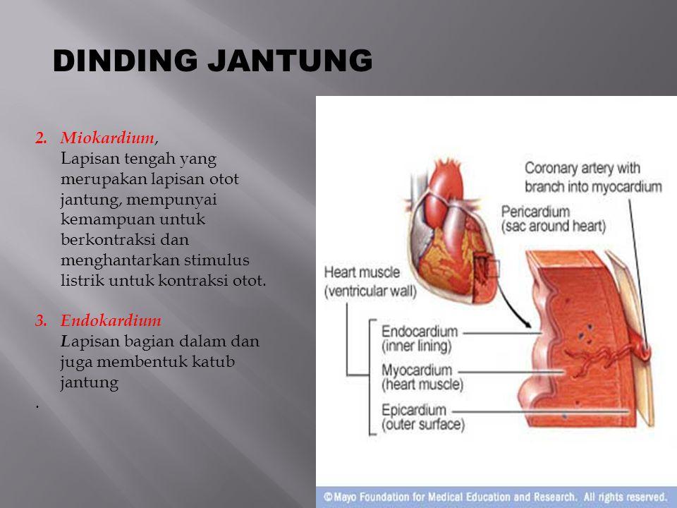 DINDING JANTUNG Miokardium,