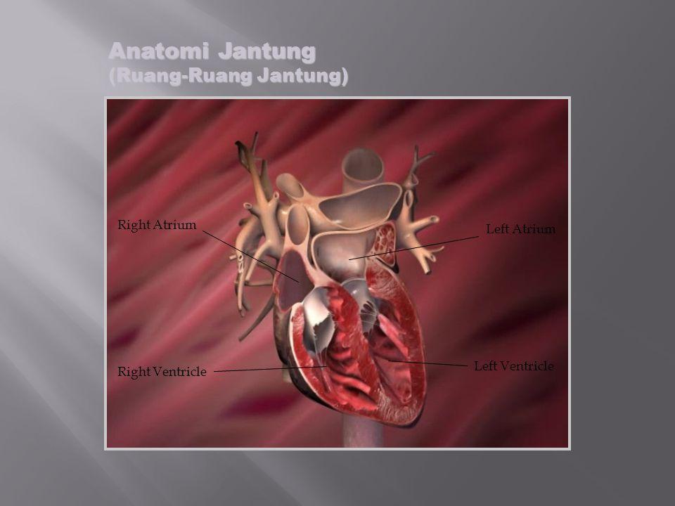 Anatomi Jantung (Ruang-Ruang Jantung)