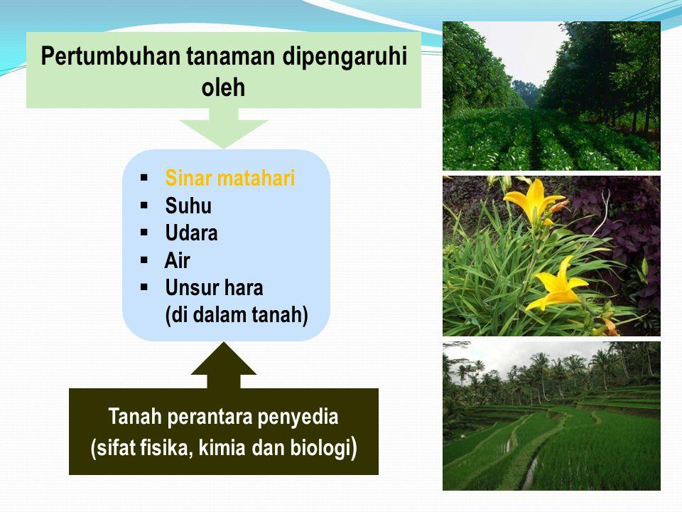 Pertumbuhan tanaman dipengaruhi oleh